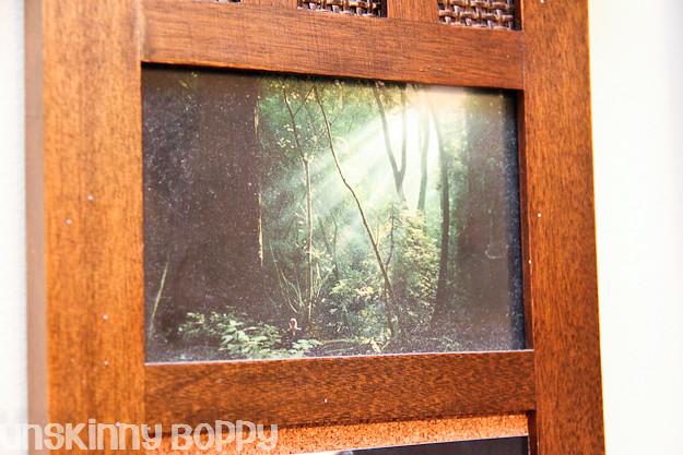 redwood photo