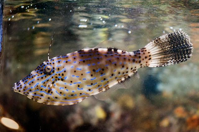 090 Washington DC Aquarium