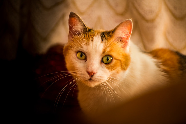 Blonde Cat Nude Photos 39