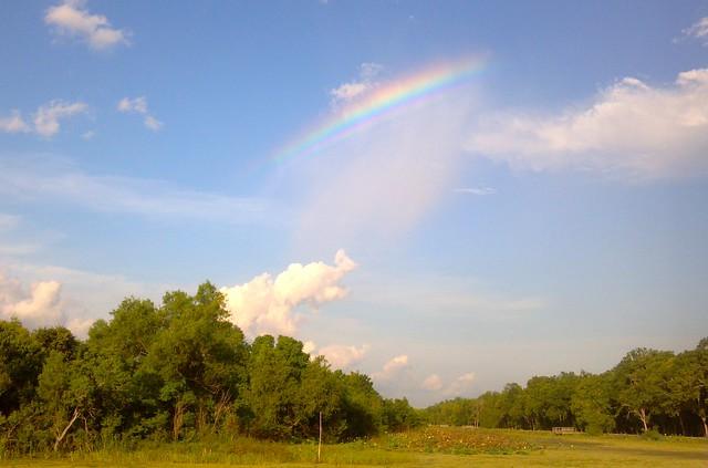 Odd Rainbow