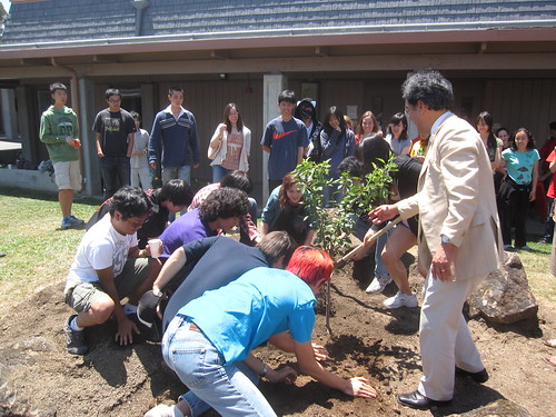 Cherry Tree Planting @ Henry Gunn High School