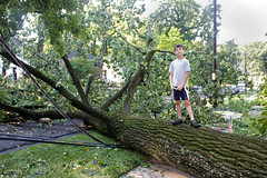 derechosaurus wrecks - big tree down