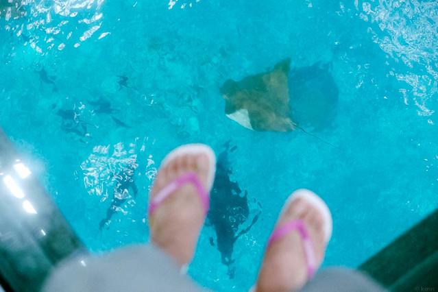 美ら海水族館のガラスの床 / Glass floor, Churaumi Aquarium