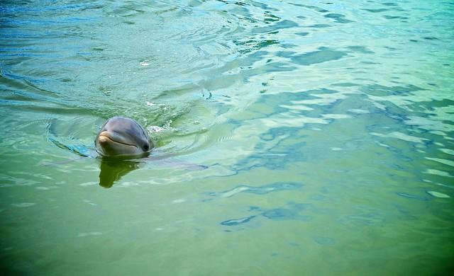 anteketborka.blogspot.com, dauphins77
