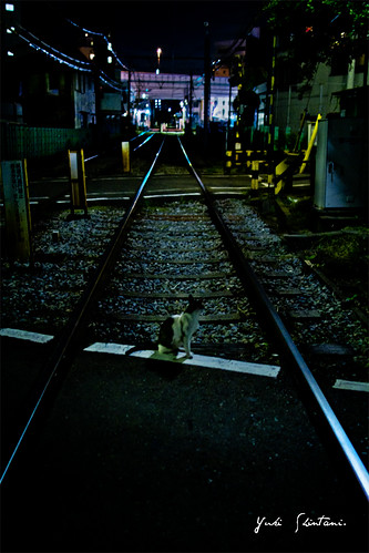 nekodamono - View my 'Summer of 2010.   Memories of railroad crossing cats who spend it at midnight.' set on Flickriver