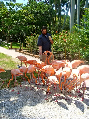 Feeding the Flamingos!