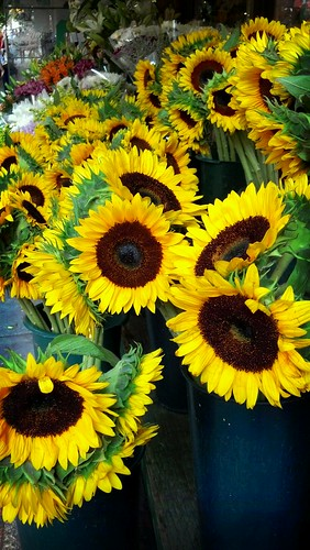 Sunflowers by ShellyS