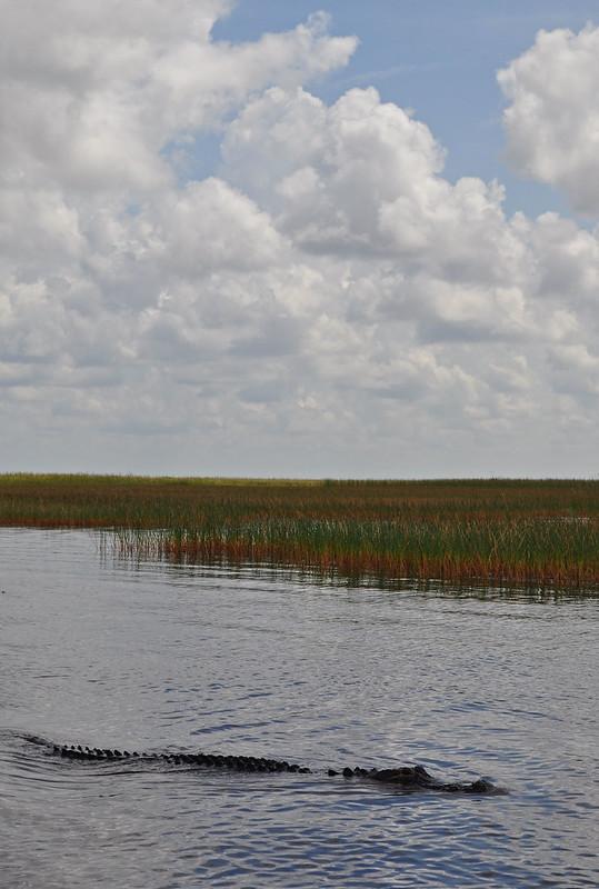 Everglades (13)
