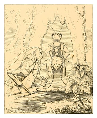 019- La cigarra y la hormiga-The fables of Aesop and others translated into human nature 1857-.Charles Henry Bennett