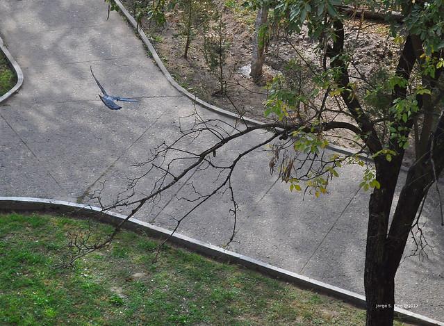 Pirueta de paloma II