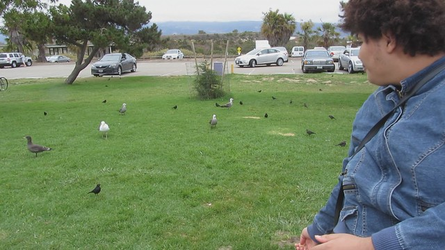 MVI_8243 120716 Goleta Beach gull catches Malika food 7s