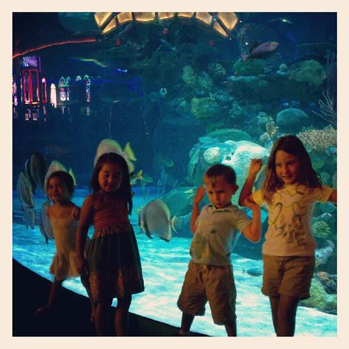 Hotel aquarium.