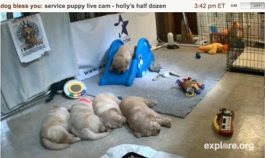 Mollys Half Dozen
