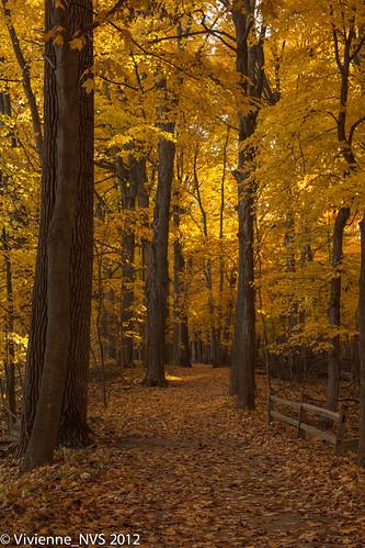 morning autumn gold illinois glow preserves lakecounty morningwalk awalkinthewoods ryersonconservationarea lcfpd