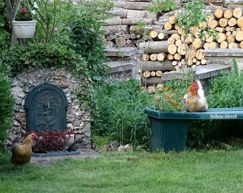 Dame poule & Héglantine
