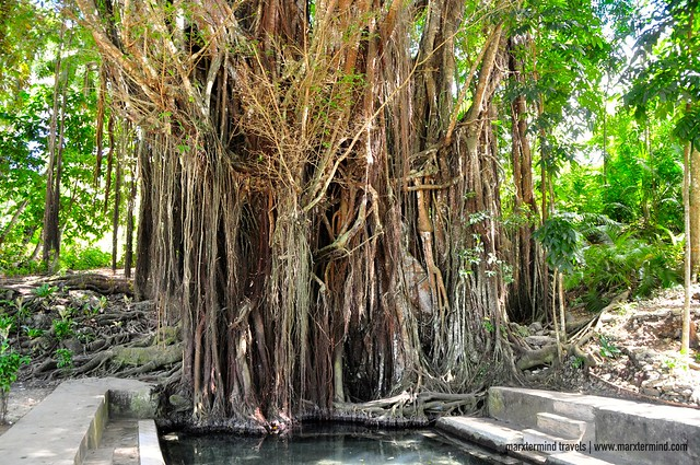 Old Balete Tree in Siquijor