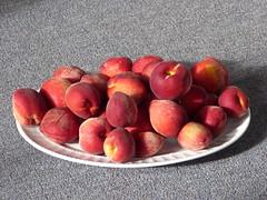 starr-160317-0573-Prunus_persica_var_persica-Flordaprince_fruit_harvest-Hawea_Pl_Olinda-Maui