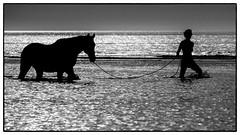 De Haan - Girls and horses