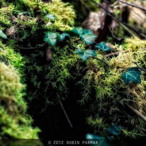 green hollow