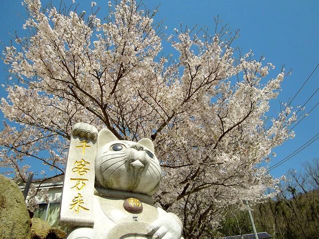 桜と招き猫