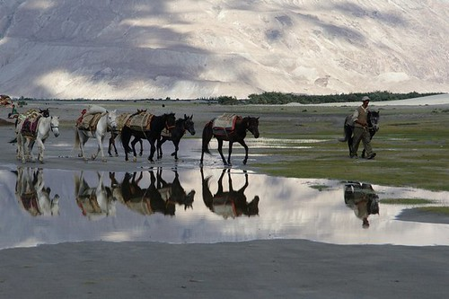 Doubled Horses caravan in the high mountains of Ladakh