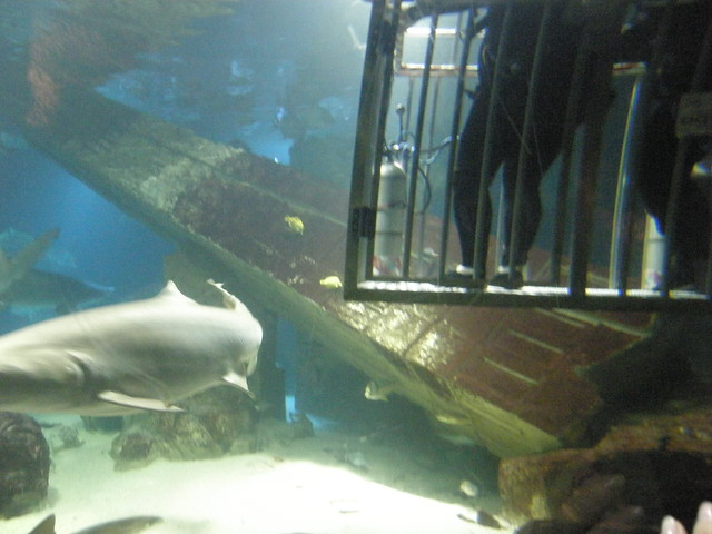 Shark Dive Xxxviii Photos From Long Island Aquarium