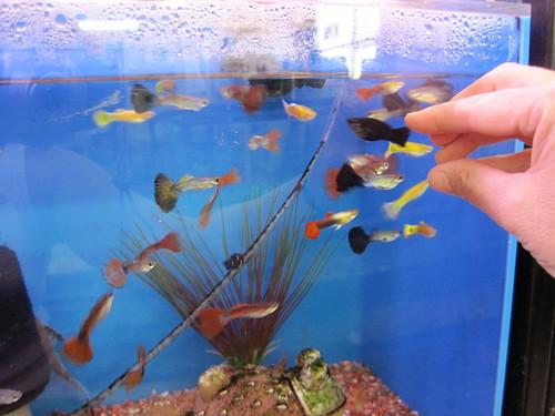 How One Free Goldfish ...