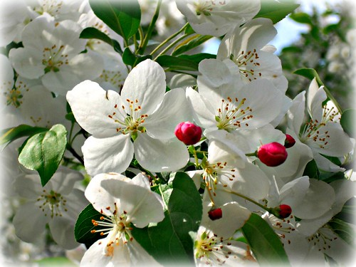 ~ Blossoms  of Hope  and Inner Peace ~