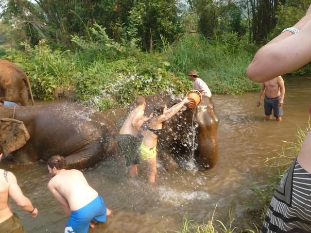 John scrubbing an elephant