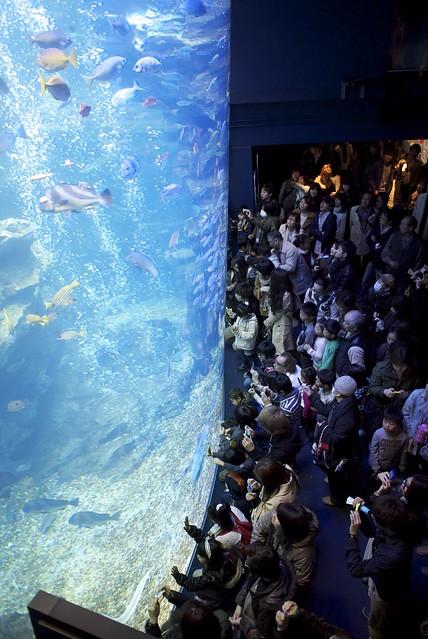 京都水族館、メインプール