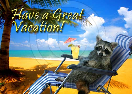 Have a great vacation raccoon flickr photo sharing