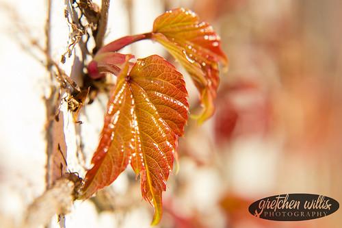 Macro Leaf-2872