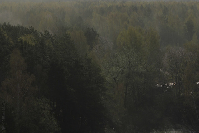 пыльца над лесом