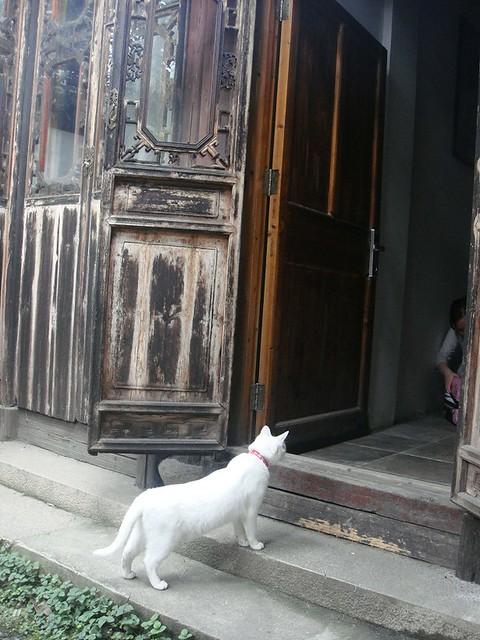 16 一只猫趴在门口看加菲收拾行李。又要走了,真是不舍