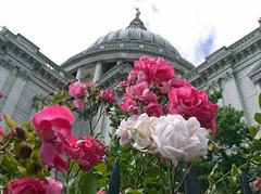 St Paul's Roses