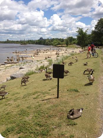 Bike ride down the river