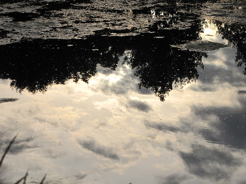 Reflections of a scrambled sky