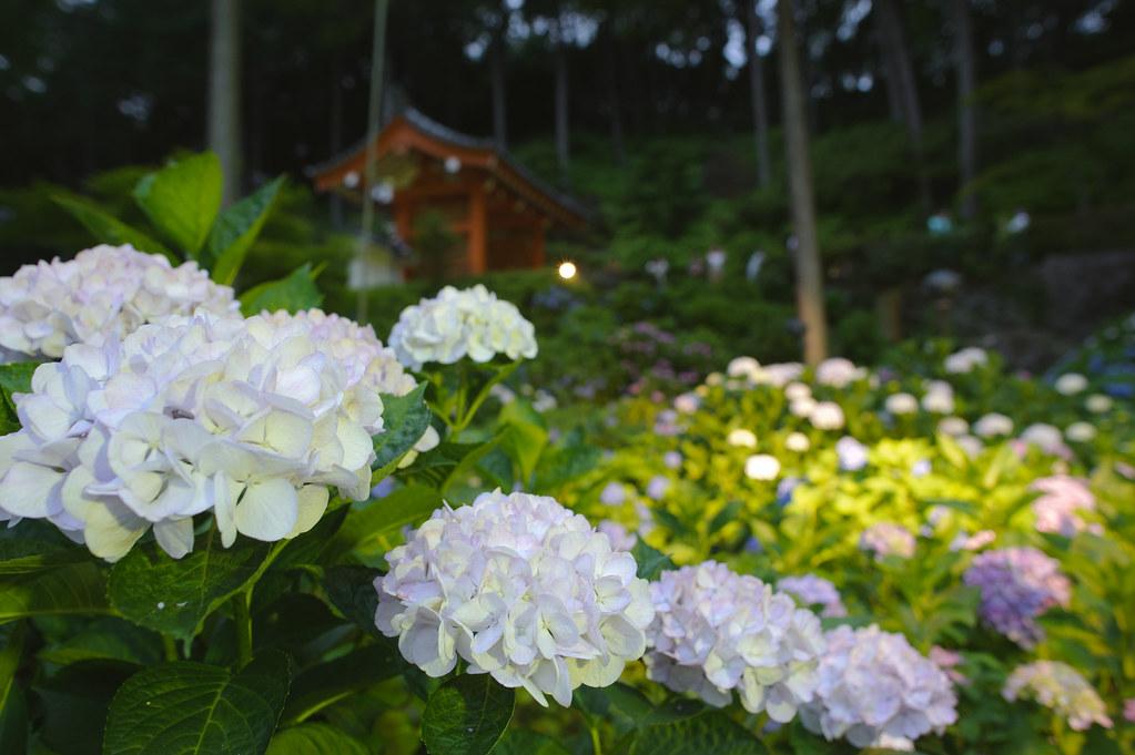 Mimurotoji Temple