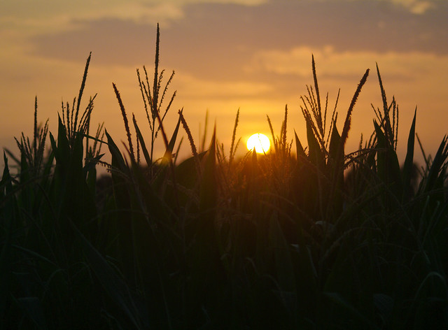 Sunset over the Corn