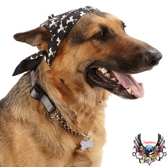 bret michaels dog black bandana