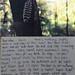 Road Trip Writing: Week 2 by :.Jill.: