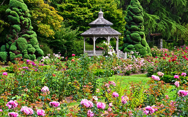 The Rose Garden At Woodland Parkzoo Woodland Park Zoo Seattle Wa 2015 ...