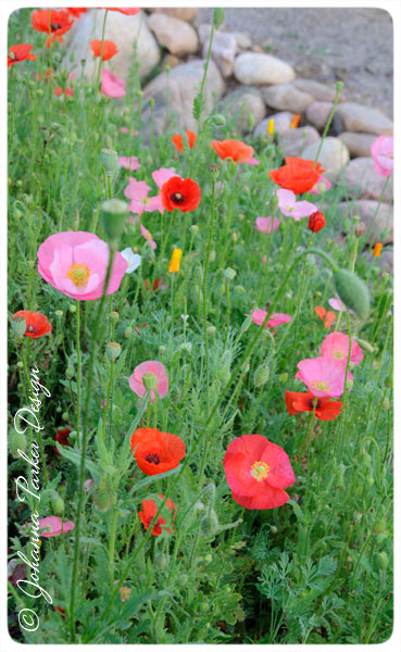 Pretty-Poppies