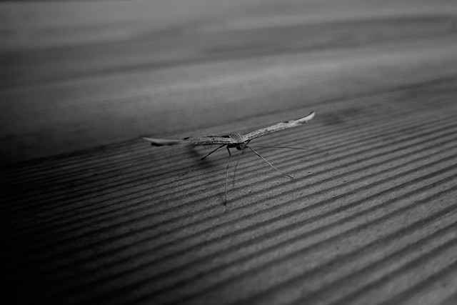riddick moth 5