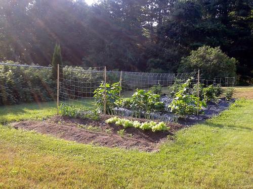 Our Garden 2012