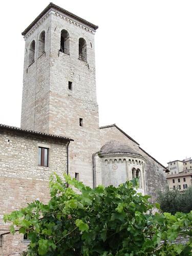 grapevines in churchyard farm, with church