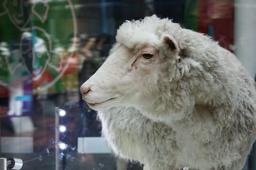 Dolly Sheep! In Scotland National Museum - Edinburgh