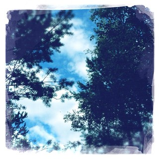 Blue sky through the branches