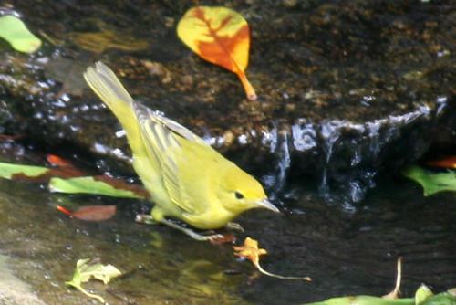bird 097