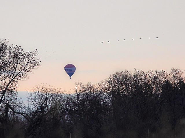 Balloon and Geese 20121103